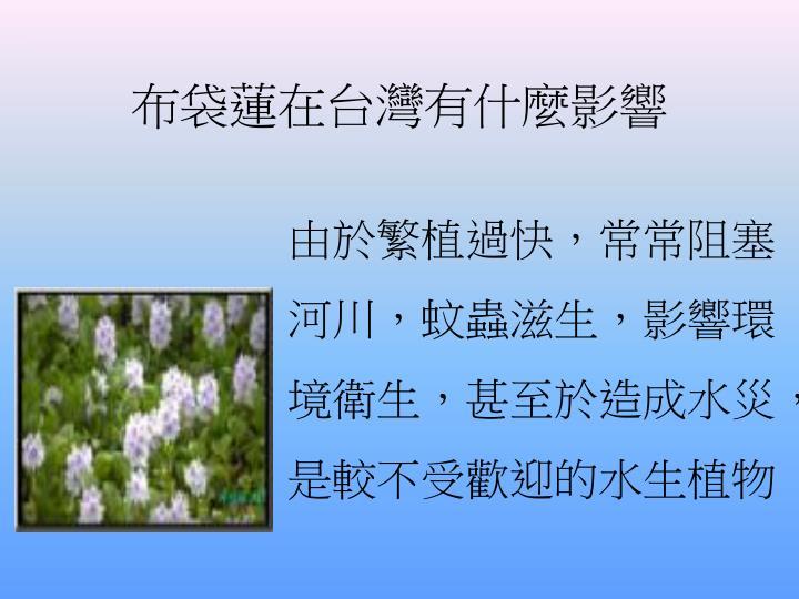 布袋蓮在台灣有什麼影響