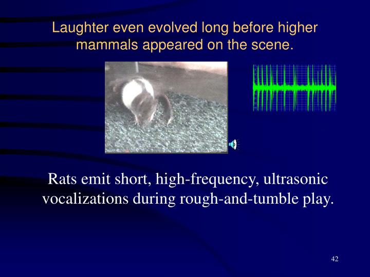 Laughter even evolved long before higher mammals appeared on the scene.