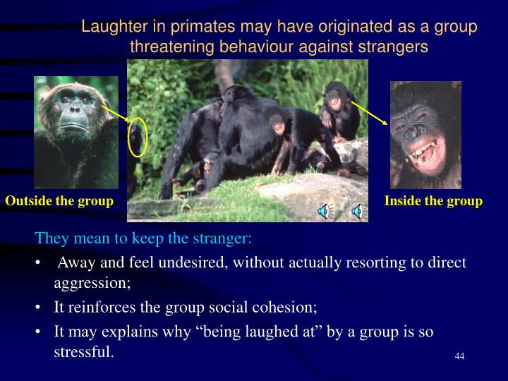 Laughter in primates may have originated as a group threatening behaviour against strangers