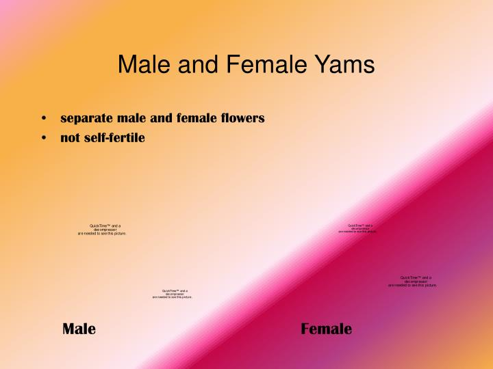 Male and Female Yams