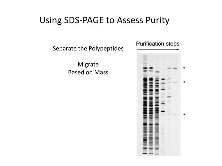 Using SDS-PAGE to Assess Purity