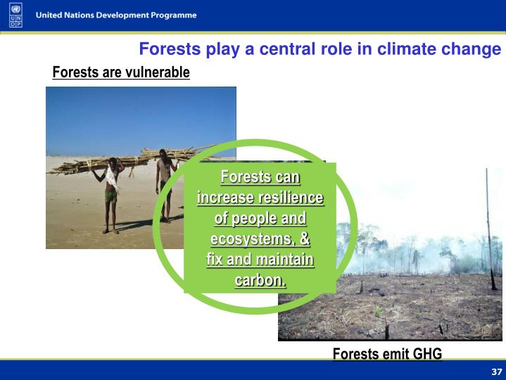 Forests play a central role in climate change