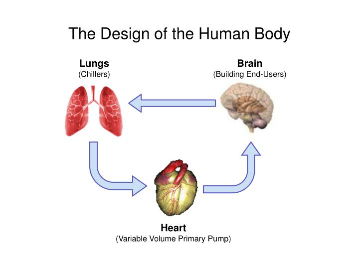 The Design of the Human Body