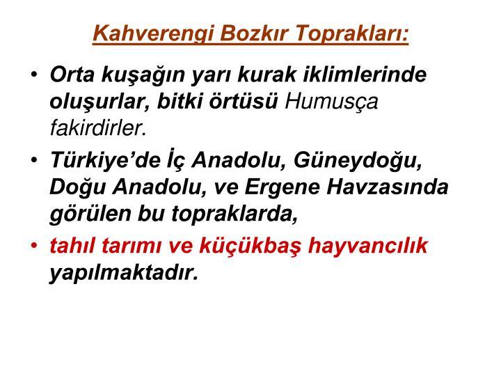 Kahverengi Bozkır Toprakları:
