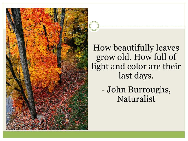 How beautifully leaves grow old. How full of light and color are their last days.