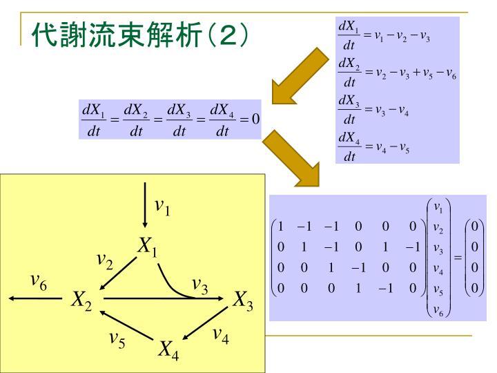 代謝流束解析(2)