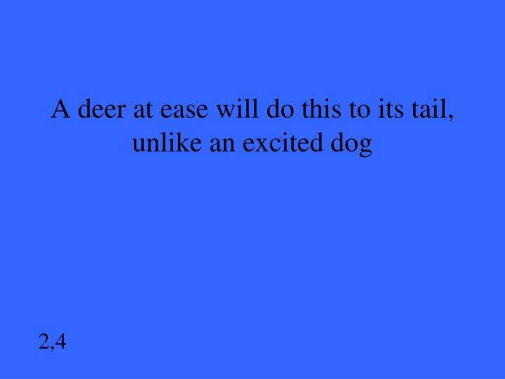 A deer at ease will do this to its tail, unlike an excited dog