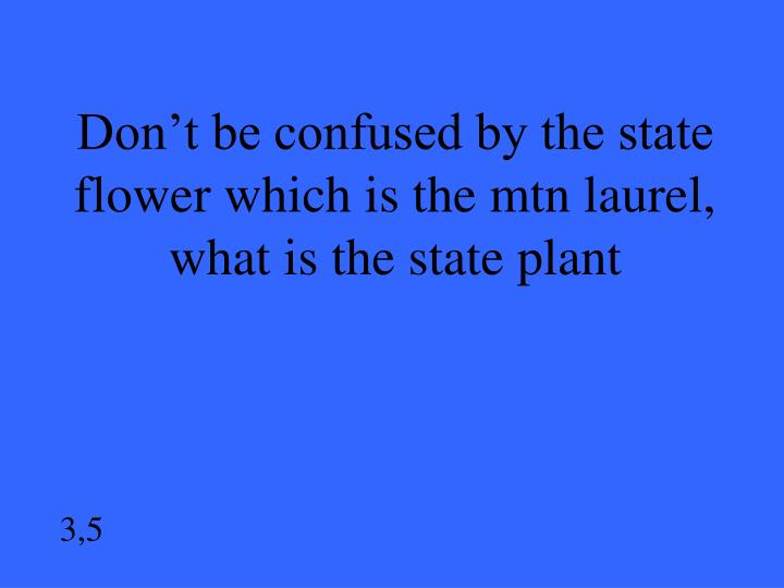 Don't be confused by the state flower which is the mtn laurel, what is the state plant