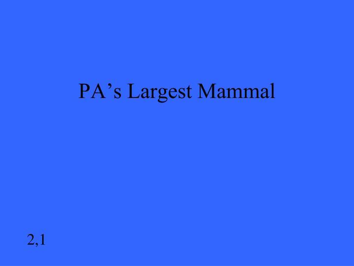 PA's Largest Mammal