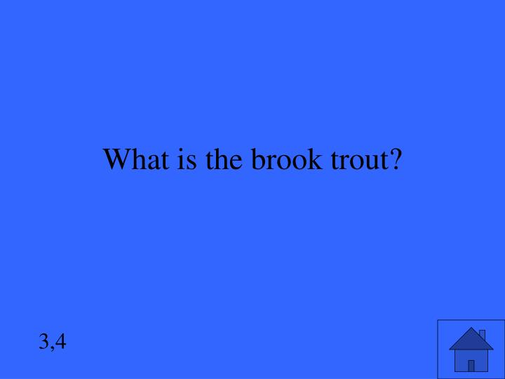 What is the brook trout?