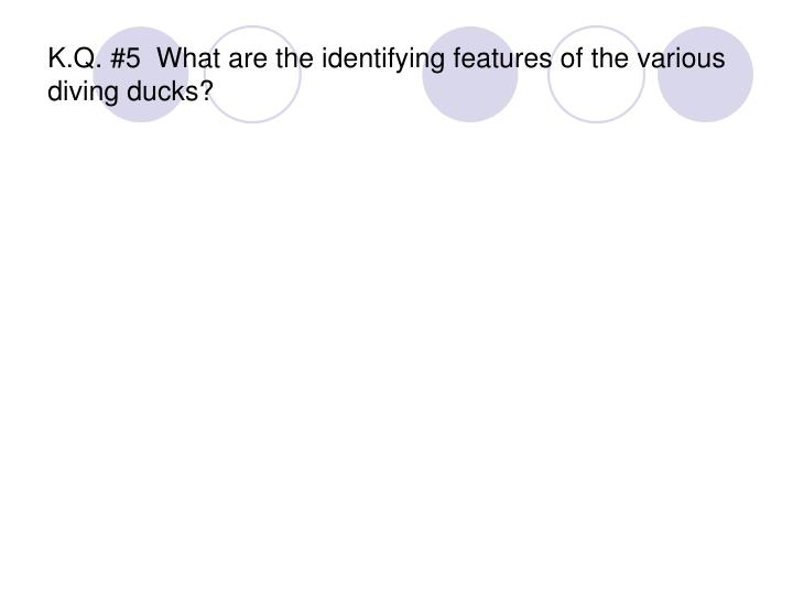 K.Q. #5  What are the identifying features of the various diving ducks?