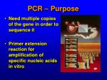 pcr purpose