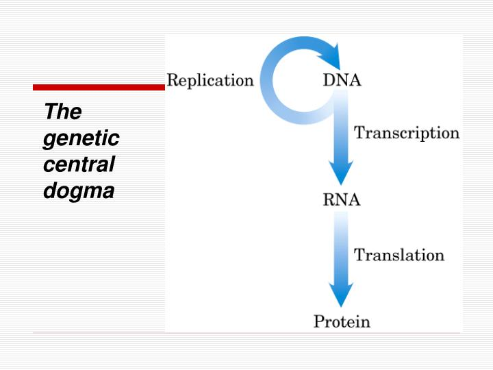 The genetic central dogma