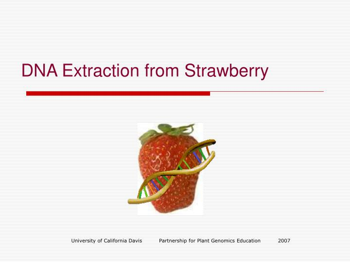 dna extraction from strawberries - alcohols essay The purpose of this experiment is to extract dna from strawberries i chose strawberries because they are easy to manipulate and they contain a large genome i used the alcohol extraction method to isolate dna and to make it visible to the naked eye.