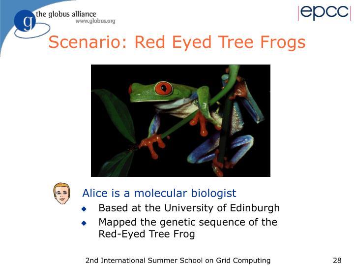 Scenario: Red Eyed Tree Frogs