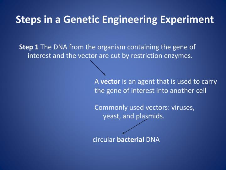 Steps in a Genetic Engineering Experiment