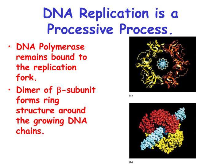 DNA Replication is a Processive Process.