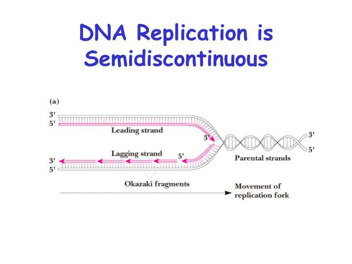 DNA Replication is Semidiscontinuous
