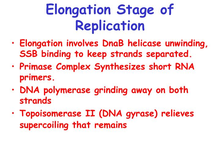 Elongation Stage of Replication