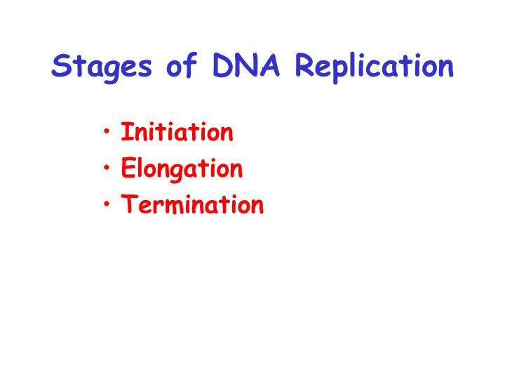 Stages of DNA Replication