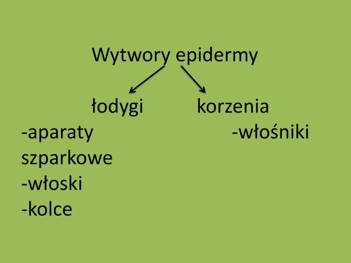 Wytwory epidermy
