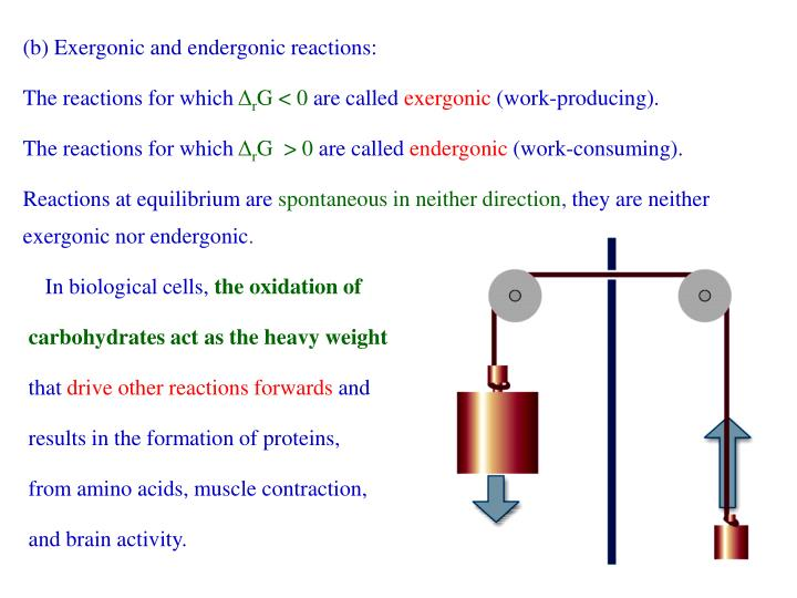 (b) Exergonic and endergonic reactions: