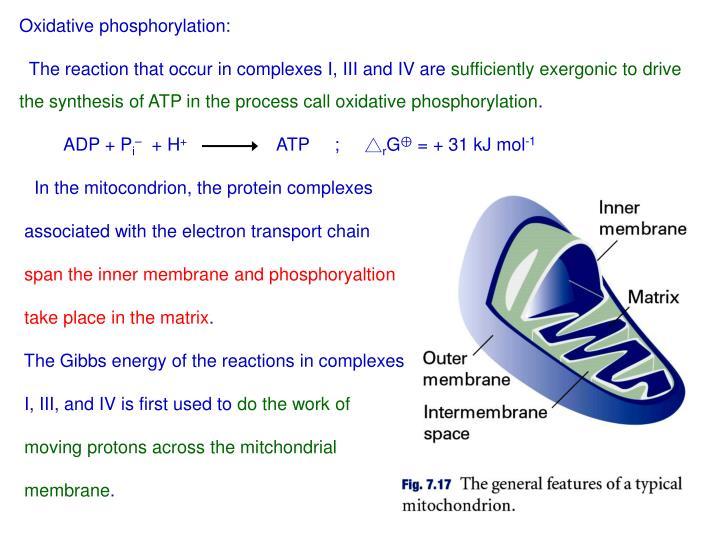 Oxidative phosphorylation: