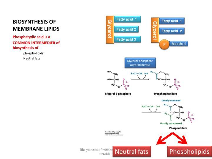 Biosynthesis of membrane lipids