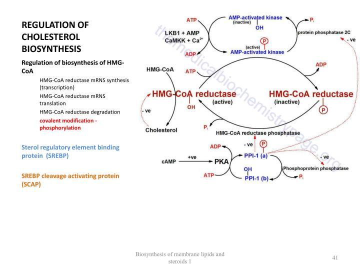 REGULATION OF CHOLESTEROL  BIOSYNTHESIS