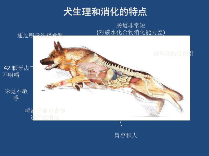 犬生理和消化的特点