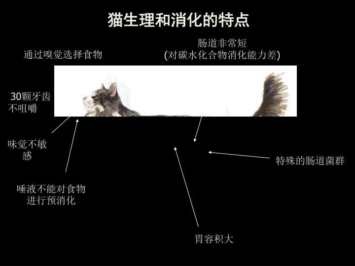猫生理和消化的特点