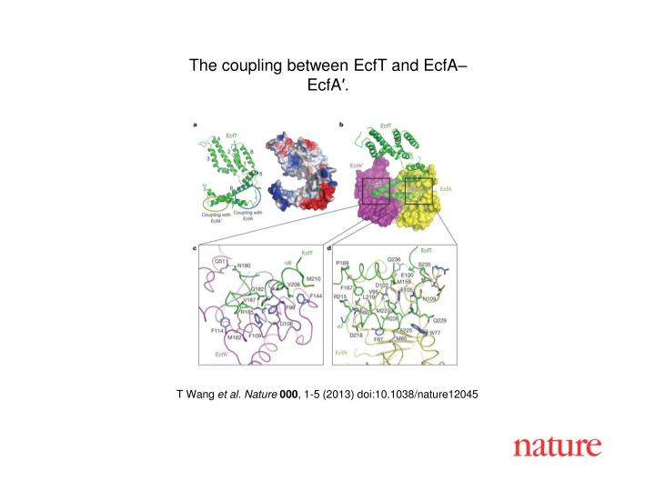 The coupling between EcfT and EcfA–