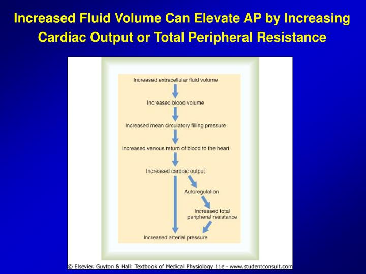 Increased Fluid Volume Can Elevate AP by Increasing Cardiac Output or Total Peripheral Resistance