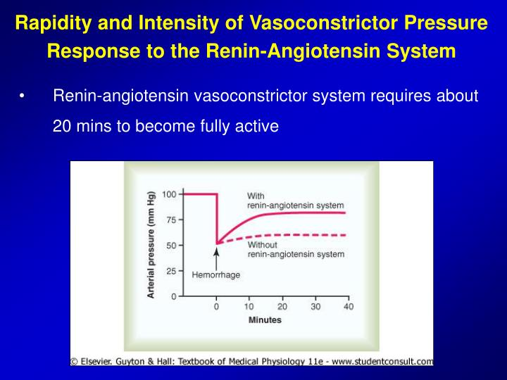 Rapidity and Intensity of Vasoconstrictor Pressure Response to the Renin-Angiotensin System