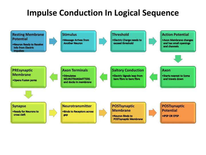 Impulse conduction in logical sequence