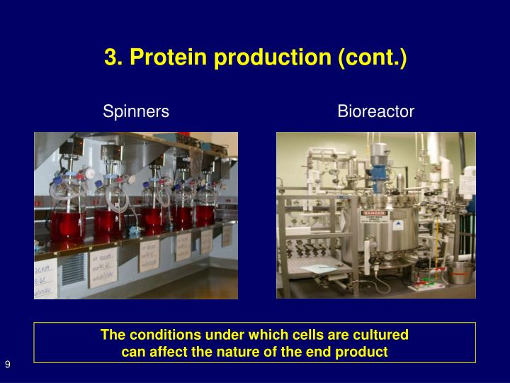 3. Protein production (cont.)