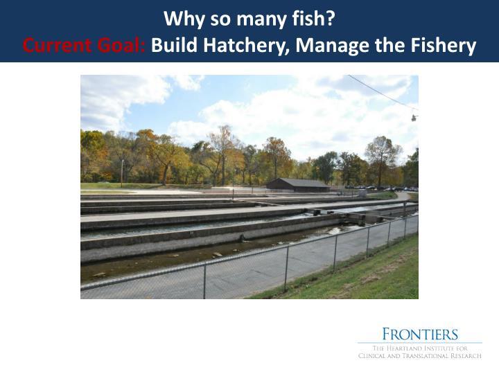Why so many fish?