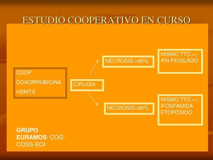 ESTUDIO COOPERATIVO EN CURSO