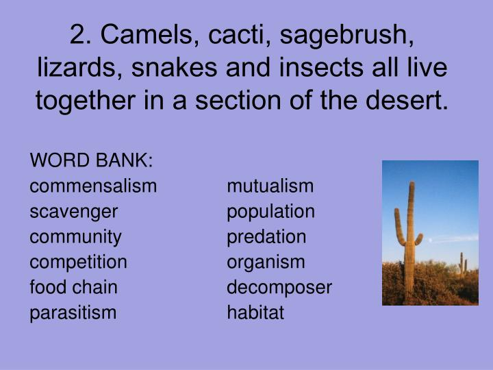 mutualistic relationship of young desert plants Biol 4120 principles of mutualistic relationship does not have to then supply the young plant with sugars and proteins until it becomes.