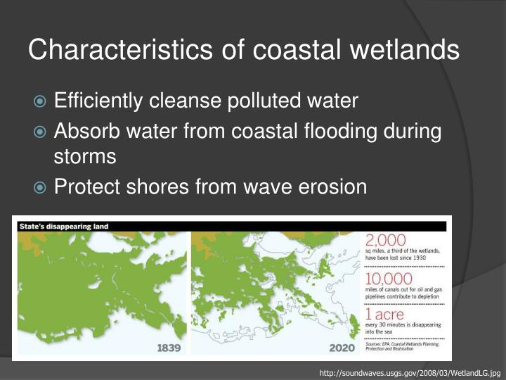 Characteristics of coastal wetlands