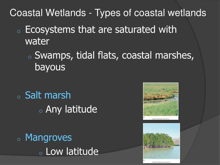 Coastal Wetlands - Types of coastal wetlands