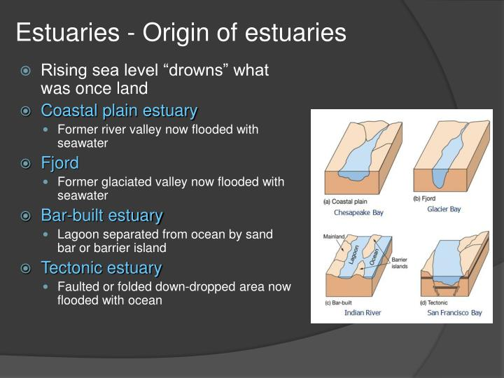 Estuaries - Origin of estuaries