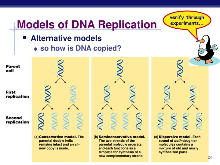 The advantages of dna replication custom paper help the advantages of dna replication malvernweather Image collections