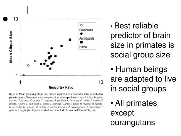 Best reliable predictor of brain size in primates is social group size