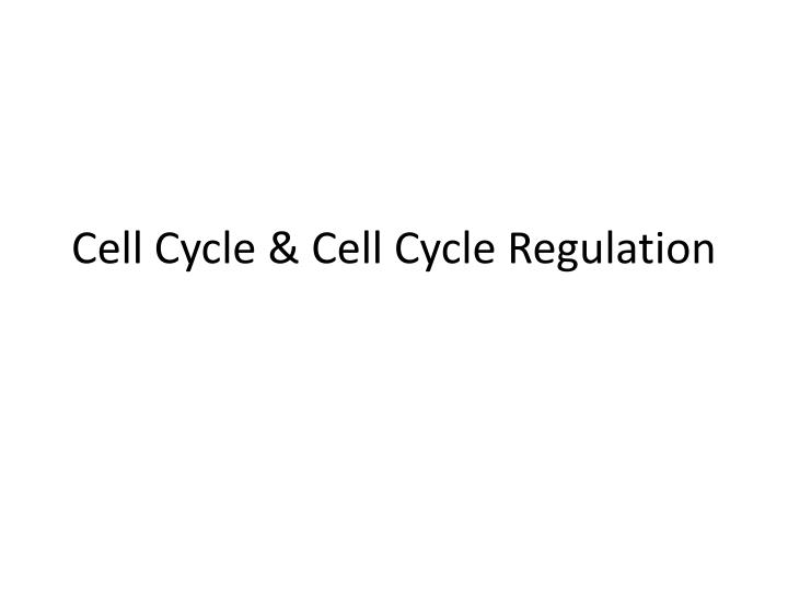cell cycle cell cycle regulation n.