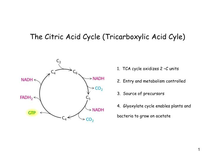 Ppt The Citric Acid Cycle Tricarboxylic Acid Cyle