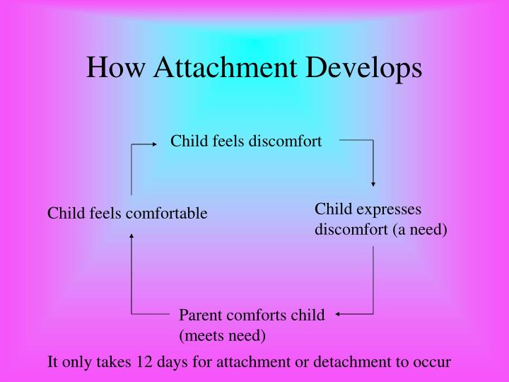 how attachment develops essay The following essay will explore the attachment theory by discussing how the theory was developed, making note of the influential theorists involved in the attachment theory.