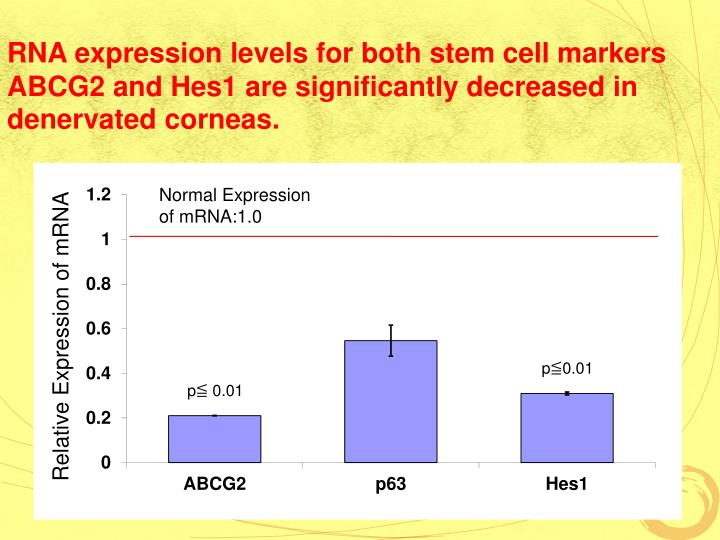 RNA expression levels for both stem cell markers ABCG2 and Hes1 are significantly decreased in