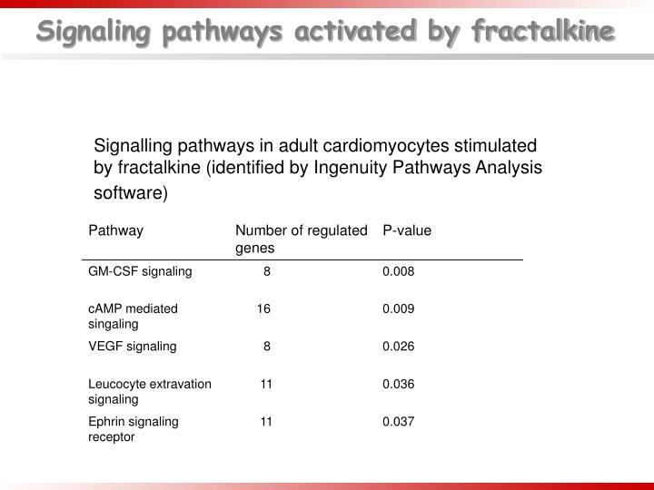 Signaling pathways activated by fractalkine