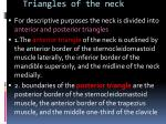 triangles of the neck